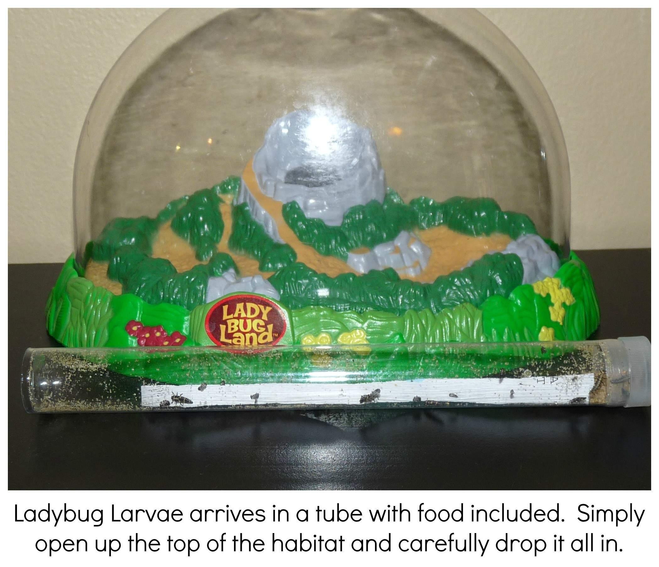 Ladybug Land Larvae
