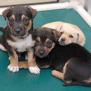 Symbolic Puppy Socialization