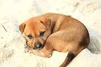 200px-Puppy_on_Halong_Bay