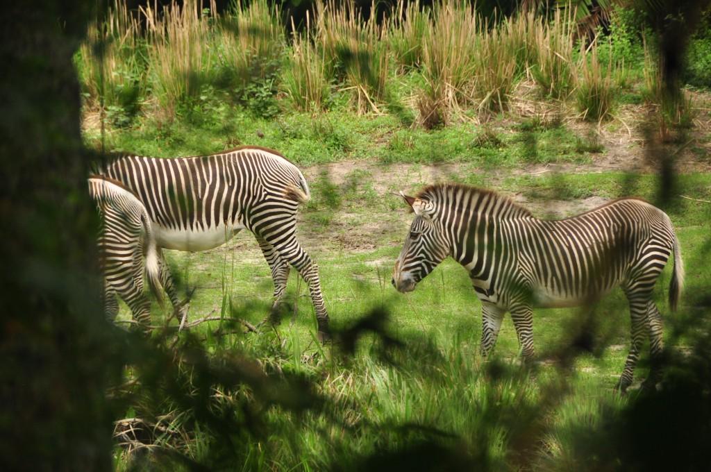 Wild Africa Trek 011
