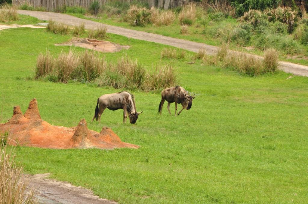 Wild Africa Trek 114