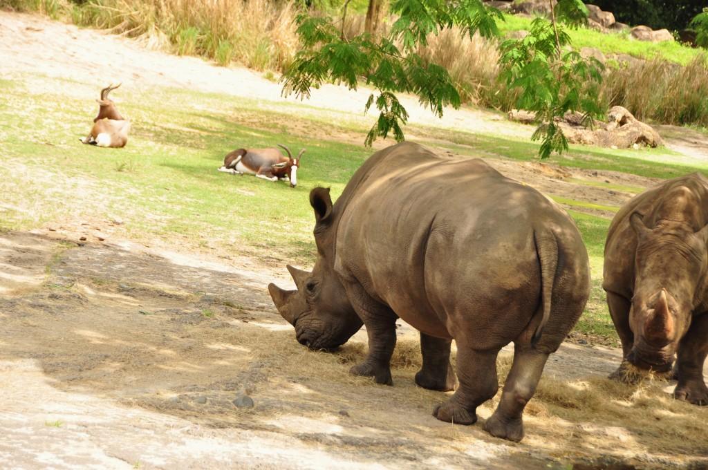 Wild Africa Trek 159
