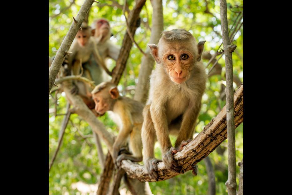 monkeykingdom552f1920c1144