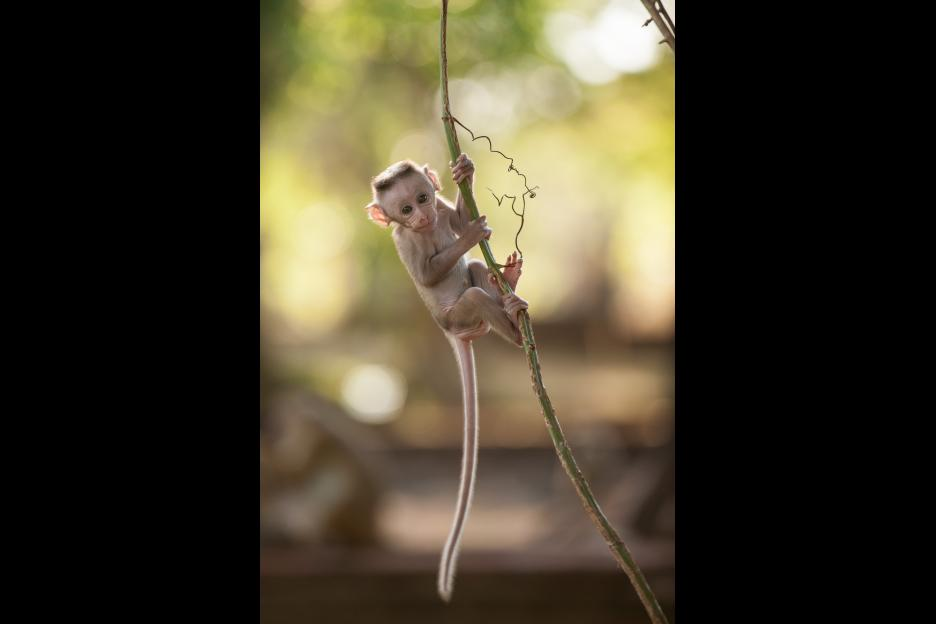 monkeykingdom552f19310b6c9