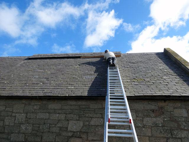 Tom-the-roofer