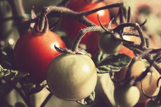 tomato-676532_640