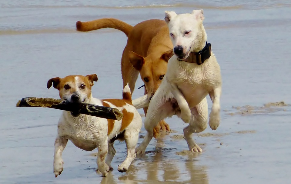 dogs-974543_960_720