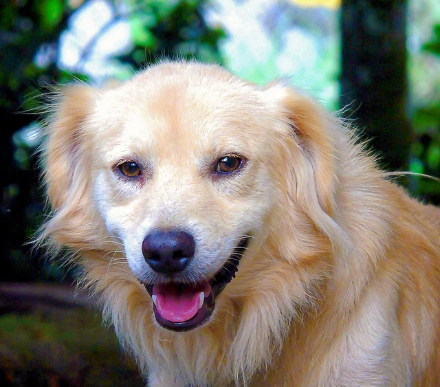 Golden Pets Cute Dogs Puppy Furry Smile Animal