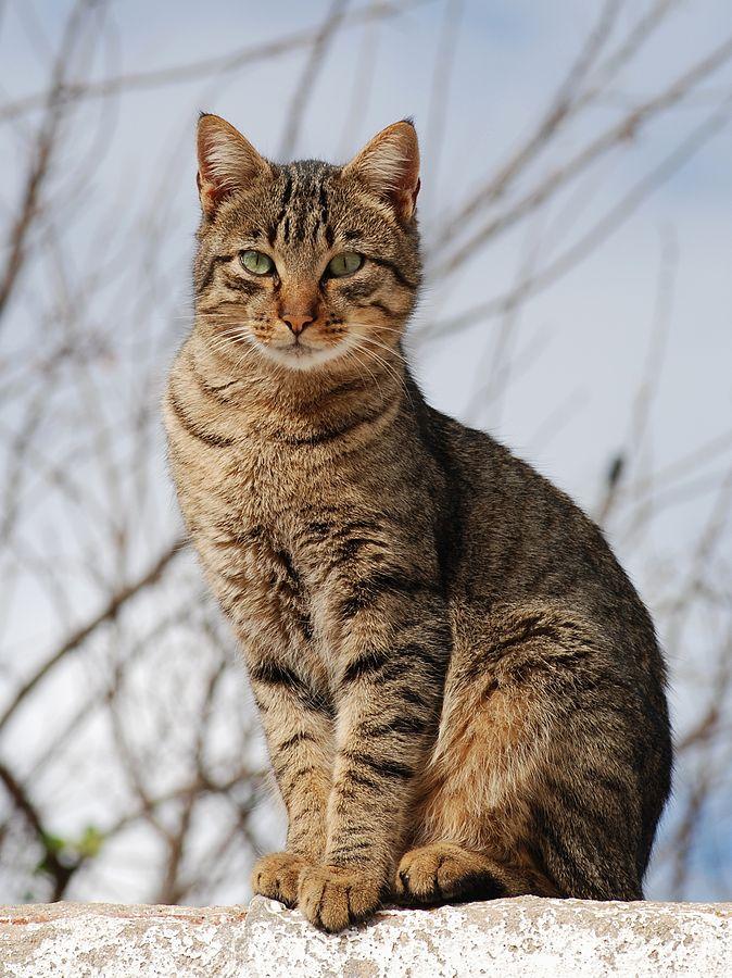 674px-Cat_November_2010-1a