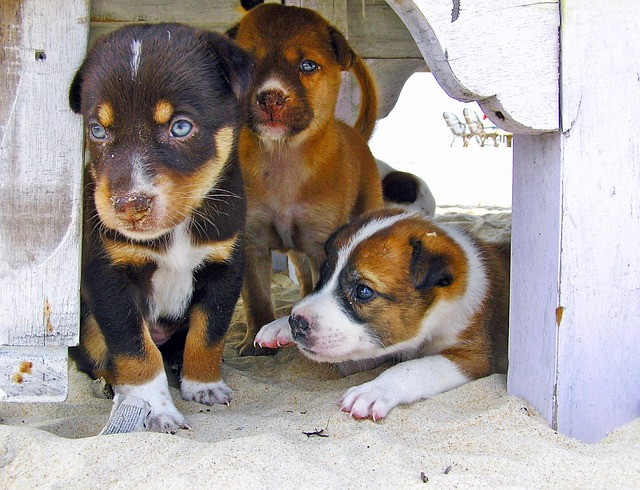 puppies-1050589_640