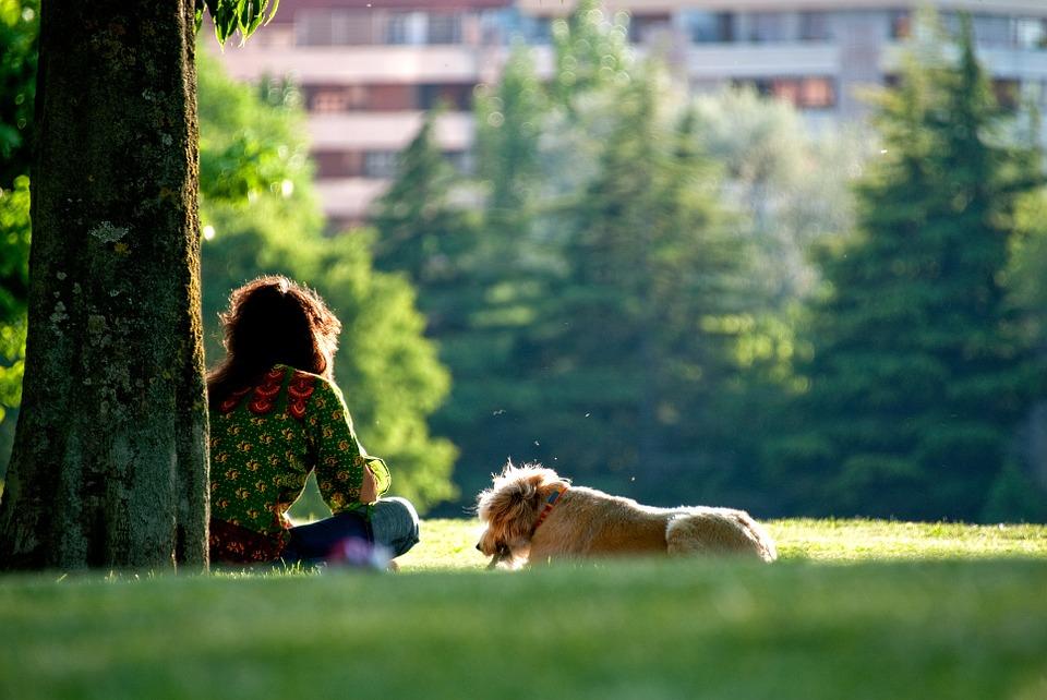 dog-264718_960_720