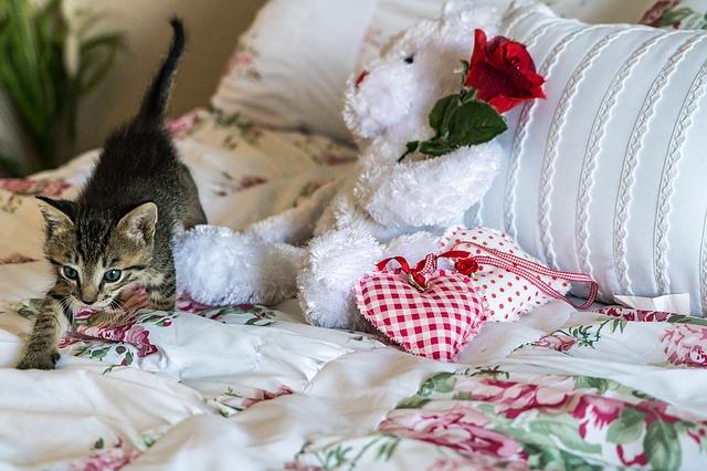 kitten-1517534_640
