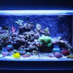 Top 4 Saltwater Aquarium Decorations